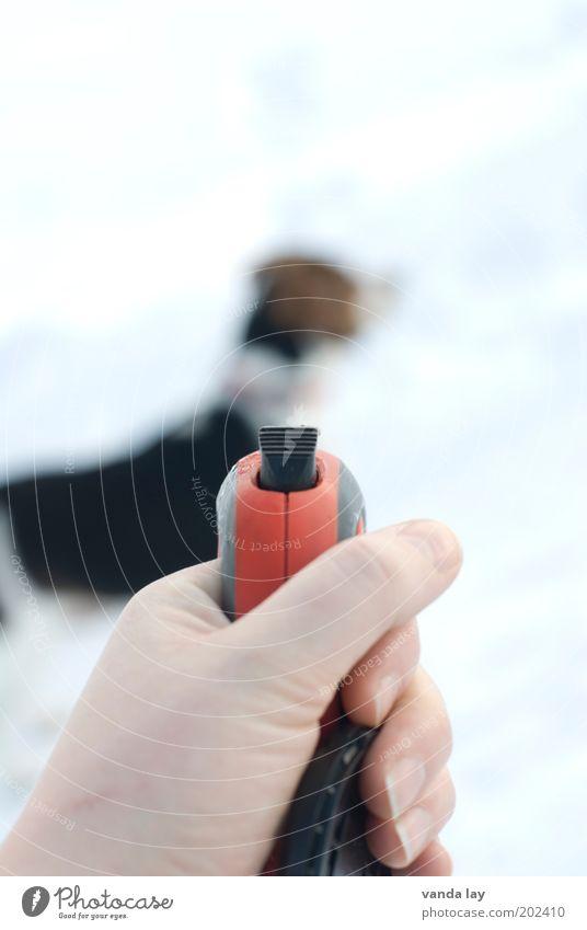 Gassi Hand Finger Tier Haustier Hund 1 Freizeit & Hobby gefangen Seil Hundehalsband Freiheit Beagle Farbfoto Gedeckte Farben Außenaufnahme Menschenleer