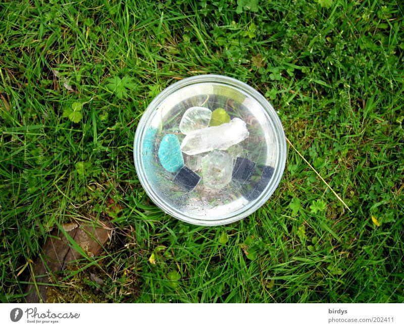 strahlenschüssel blau Wasser grün schön Farbe schwarz gelb Wiese Gras glänzend natürlich ästhetisch Dekoration & Verzierung leuchten rund rein