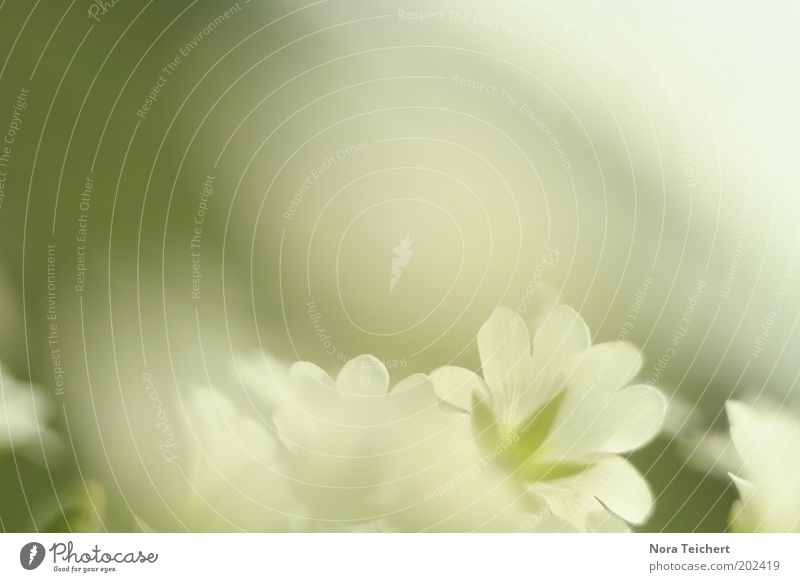 was feines Natur schön weiß Blume grün Pflanze Sommer Wiese Blüte Gras Frühling träumen Park Umwelt ästhetisch neu