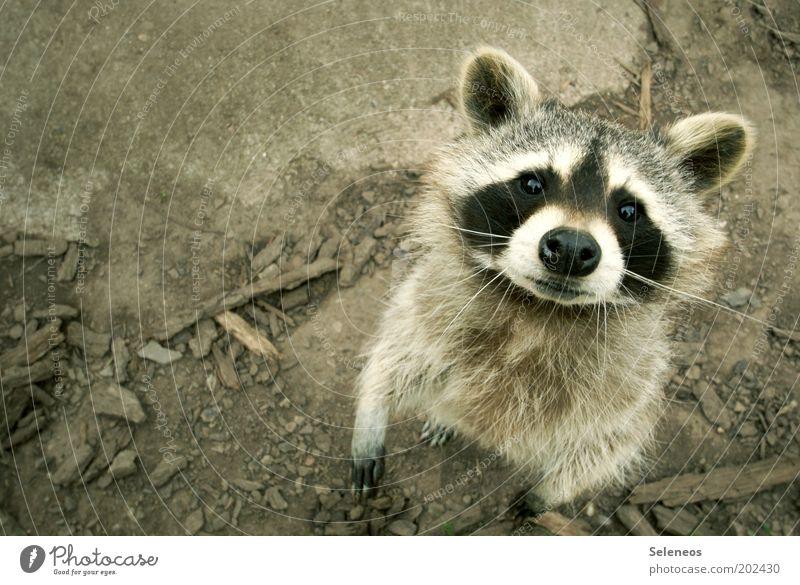 Geh und wasch dich! Freizeit & Hobby Ferien & Urlaub & Reisen Tourismus Ausflug Natur Tier Erde Wildtier Tiergesicht Fell Zoo beobachten Blick stehen Neugier
