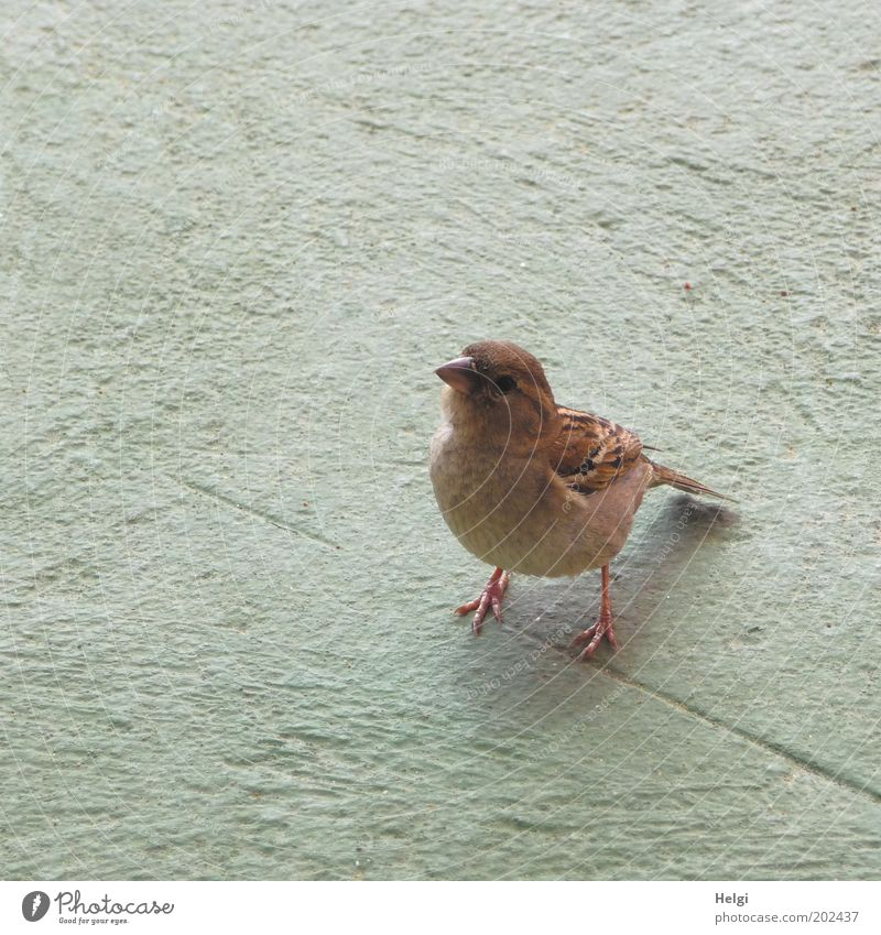 gib...gib...gib....büüüütttteee Tier grau braun Vogel warten stehen authentisch Flügel beobachten natürlich Neugier Wildtier niedlich Appetit & Hunger Wachsamkeit klug
