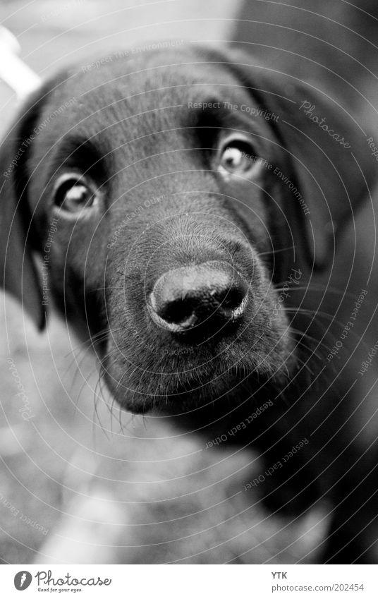 Was machst duuuuu denn da? Hund schön Tier schwarz Traurigkeit Haare & Frisuren ästhetisch niedlich Nase Neugier Haustier Geruch Tiergesicht Sorge Fragen Erwartung