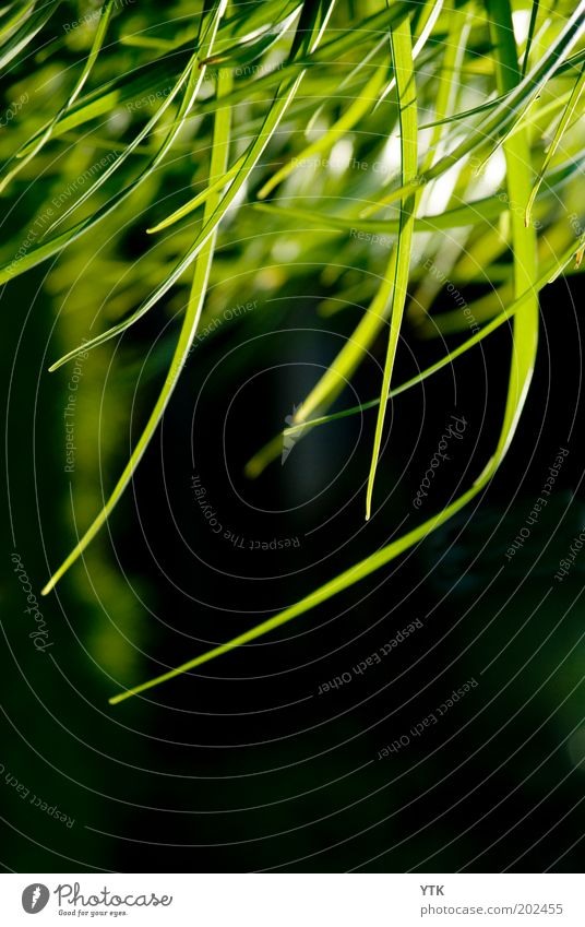 Green Rain Natur grün Pflanze Sommer schwarz Farbe Gras Umwelt Stimmung Luft Wärme frisch Wachstum Sträucher Wandel & Veränderung Halm