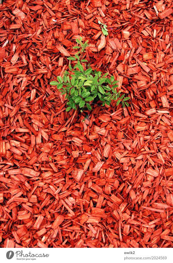 Koalitionspartner Umwelt Natur Blatt Grünpflanze Zweig Jungpflanze Garten Späne bedecken Boden Holz Wachstum authentisch Erfolg frei Gesundheit nachhaltig