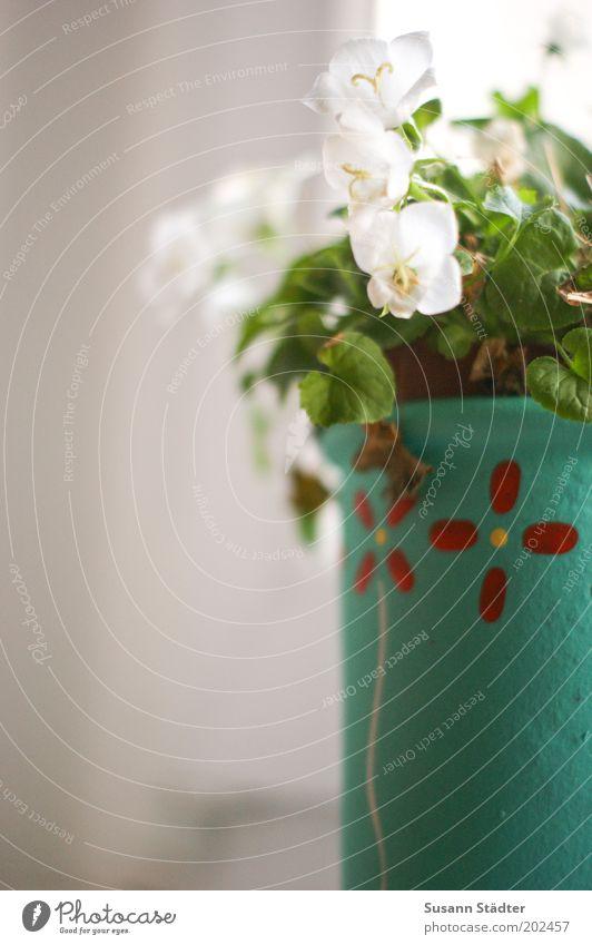 Blumentopf schön Pflanze Blüte Wachstum Kitsch Dekoration & Verzierung Häusliches Leben einzigartig türkis Schönes Wetter vertrocknet Fenster Fensterbrett