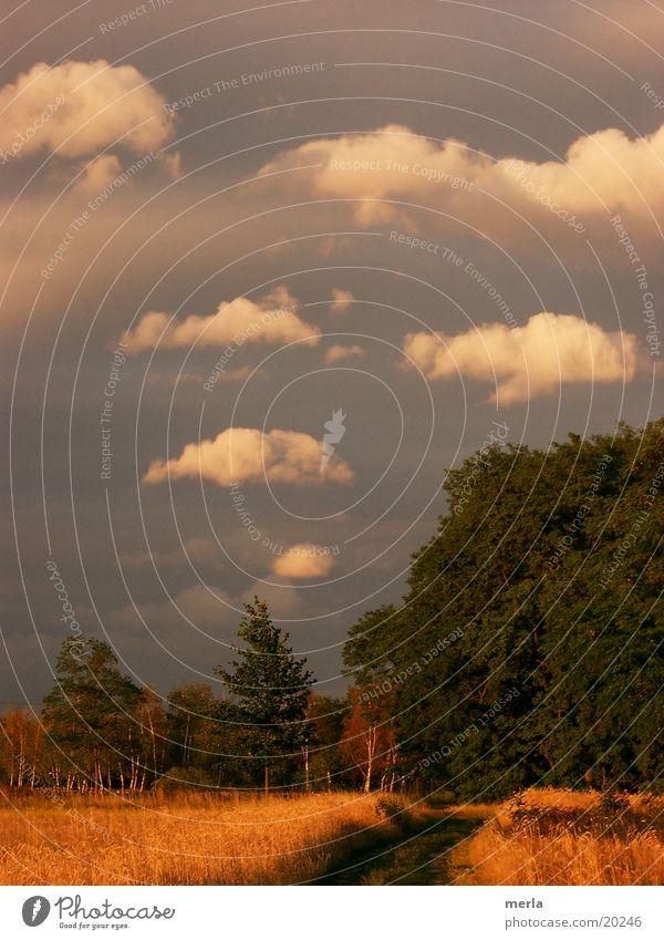 Rauchzeichen: das Unwetter ist weitergezogen ... Wolken Wald Wiese Abendsonne Sturmfront