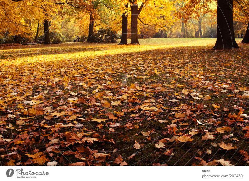 Es ist Herbst Natur schön alt Baum Blatt Gefühle Park Landschaft Umwelt gold Zeit ästhetisch fallen Jahreszeiten Herbstlaub