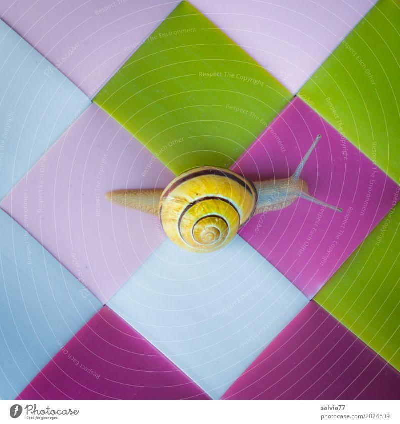 spurlos Tier Schnecke 1 Kunststoff außergewöhnlich schleimig mehrfarbig gelb grün rosa Farbe Geschwindigkeit Mobilität Perspektive Surrealismus Symmetrie