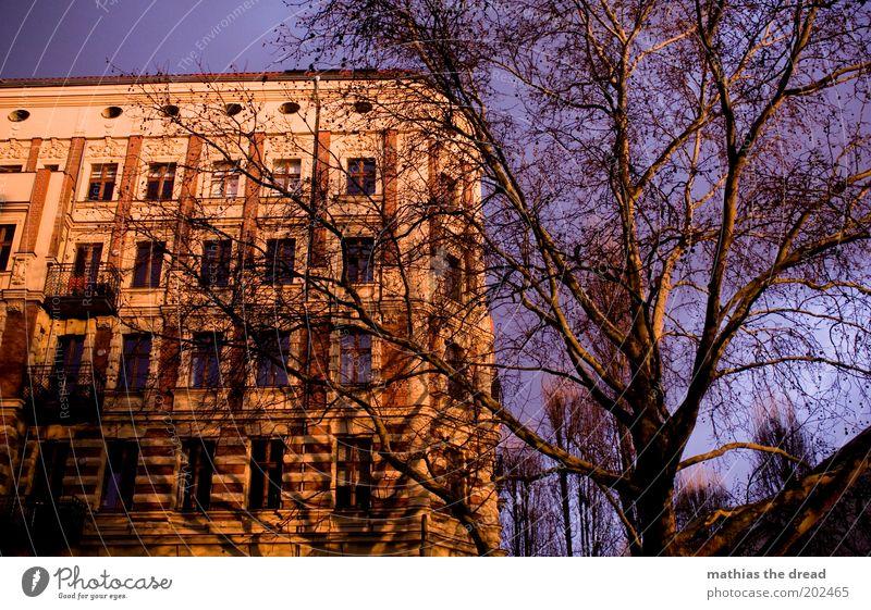 ABENDSONNE Natur schön Himmel Baum Haus Berlin Wand Fenster Mauer Gebäude Architektur Umwelt Fassade violett Ast