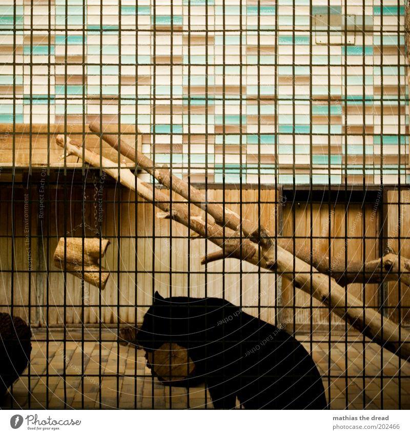 NASCHKATZE Tier Wildtier Katze Zoo 1 hocken sitzen dunkel eckig kalt Käfig Gitter Gehege Fliesen u. Kacheln steril Raubkatze Baumstamm Einsamkeit trist gefangen