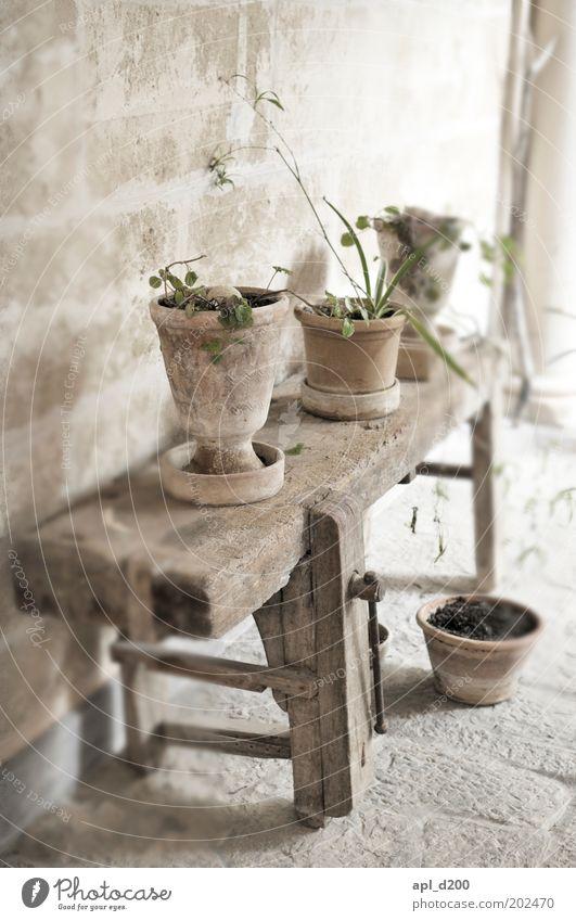 Werkbank Häusliches Leben Tisch Natur Pflanze Blume Grünpflanze Dorf Haus Platz Mauer Wand stehen alt authentisch braun grau grün Blumentopf Bank Holzbank