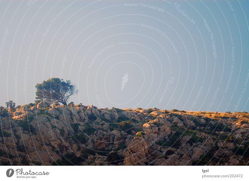 einsamer Baum Himmel Natur Ferien & Urlaub & Reisen Einsamkeit Landschaft Horizont Felsen ästhetisch Klima Hügel Sehnsucht Gelassenheit Schönes Wetter Respekt
