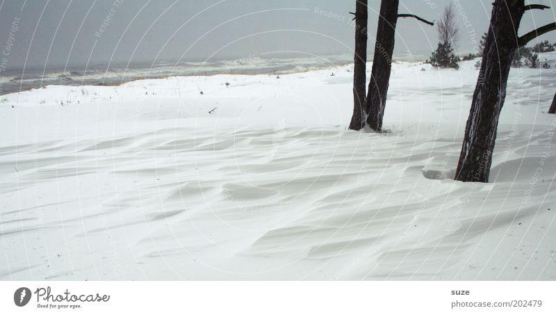 Wehe Wehe Umwelt Natur Landschaft Urelemente Himmel Wolkenloser Himmel Horizont Winter Klima Sturm Schnee Baum Küste Ostsee Meer einfach kalt grau weiß