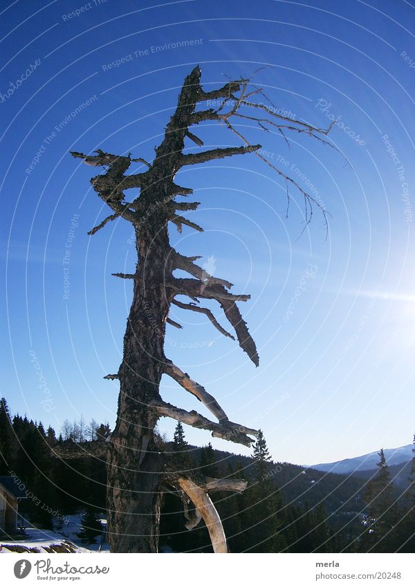 toter baum Natur Himmel Wolkenloser Himmel Baum Alpen Holz Tod Einsamkeit Senior nackt Vergänglichkeit Baumrinde Baumstamm Ast Neigung abgebrochen Außenaufnahme