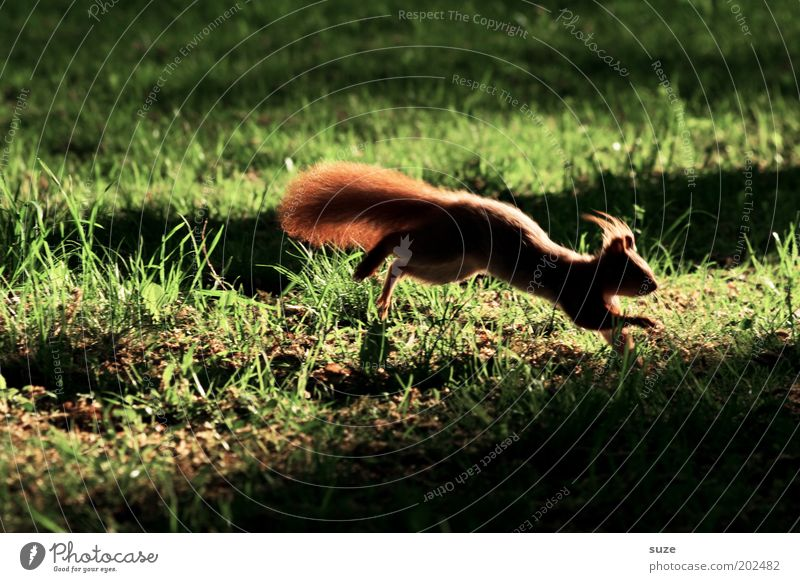 Vorsprung durch Technik Natur grün Tier Umwelt Wiese Gras klein Garten springen Park Angst Wildtier authentisch leuchten niedlich rennen