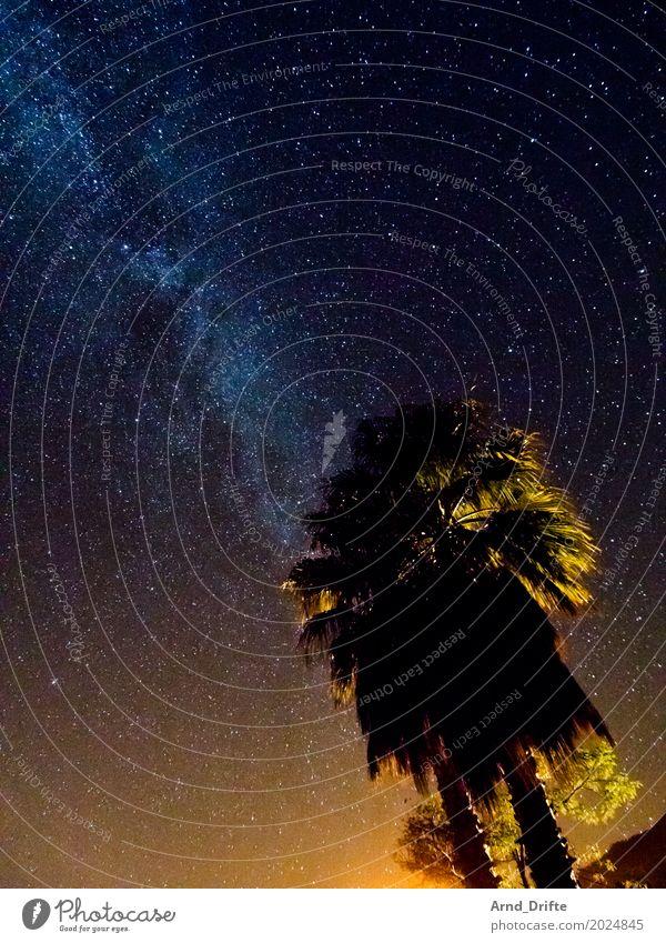 Milchstraße hinter Palmen Ferien & Urlaub & Reisen Ferne Expedition Natur Landschaft Himmel Nachthimmel Stern alt gigantisch blau gelb Weltall sternenklar