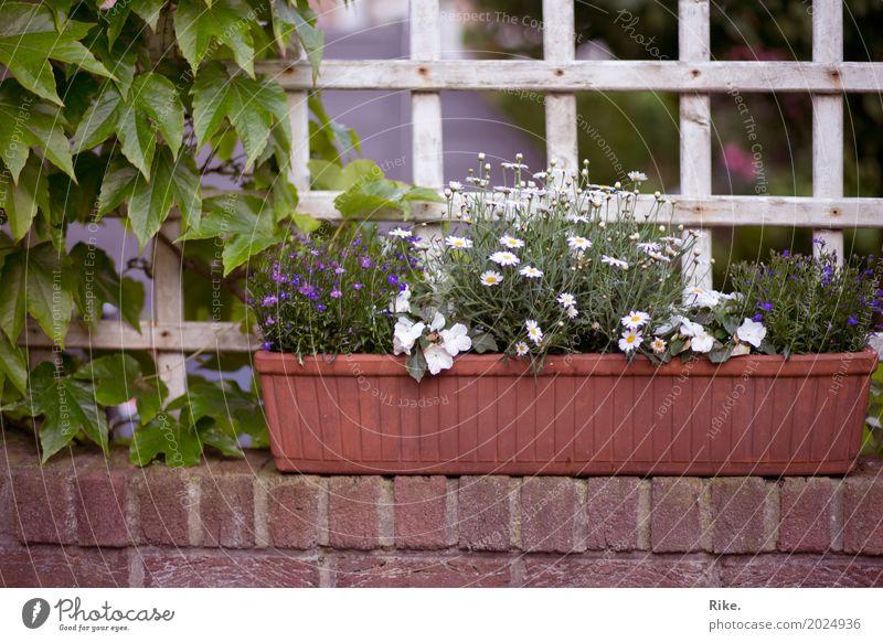 Endlich wieder Gartenzeit. Freizeit & Hobby Umwelt Natur Pflanze Frühling Sommer Schönes Wetter Blume Grünpflanze Topfpflanze Park Erholung schön Gärtner Mauer