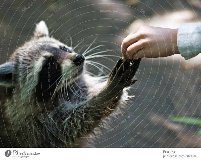 Eine Erdnuss für dich... eine Erdnuss für mich ... Mensch Kind Kindheit Haut Hand Finger Umwelt Natur Tier Wildtier Fell Pfote frech hell Neugier wild weich