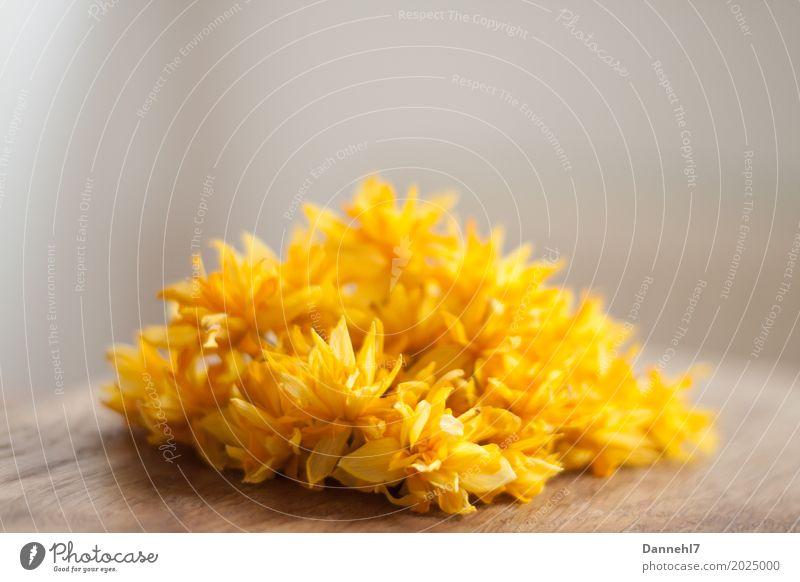 Blumenhügel Wohnung Dekoration & Verzierung Pflanze Frühling Duft trocken braun gelb orange Zufriedenheit Frühlingsgefühle Traurigkeit Tod Ende nachhaltig