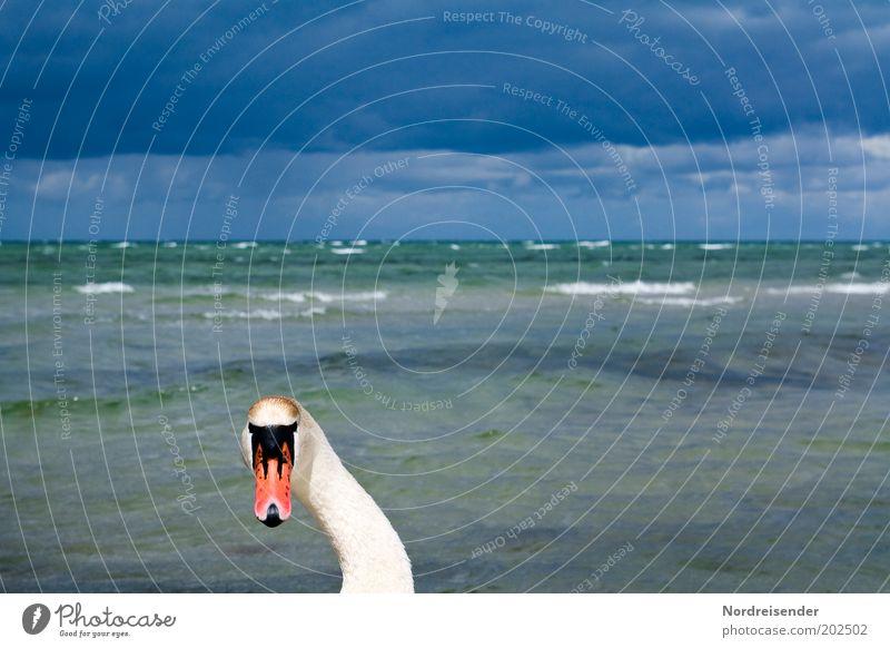 Geh mir bloß vom Hals Himmel Natur Ferien & Urlaub & Reisen blau Wasser Meer Erholung Wolken Tier Kopf Wetter Regen Wellen ästhetisch Ausflug bedrohlich