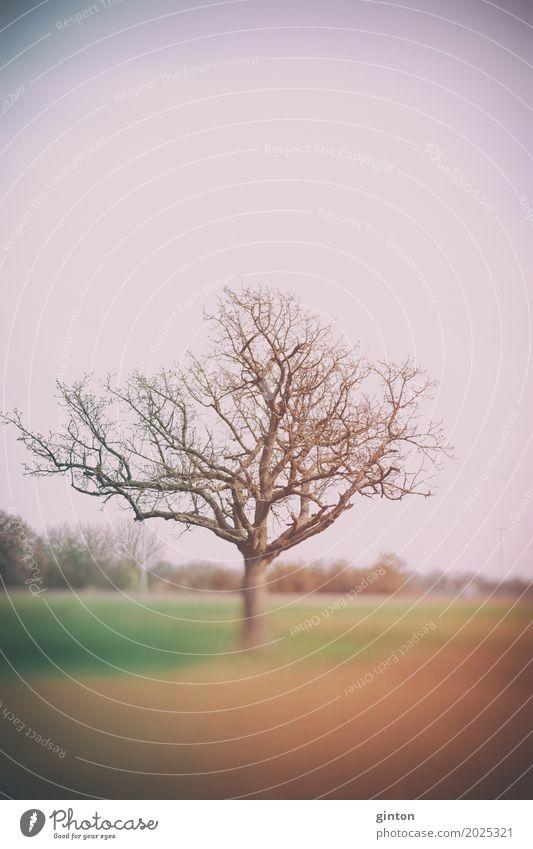 Frühlingsbaum Natur Landschaft Pflanze Wetter Nebel Baum Feld braun grün orange Unschärfe rural Jahreszeiten blätterlos blätterlose Zweige trüb Dunst