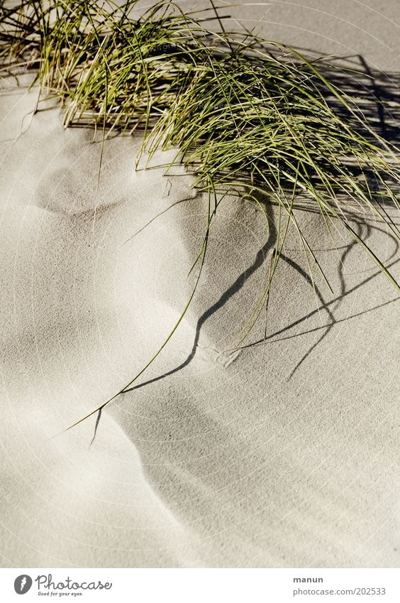 Sand Natur Pflanze Strand ruhig Gras Wärme Sand Sträucher weich Idylle Halm Stranddüne Umweltschutz Wildpflanze Dünengras