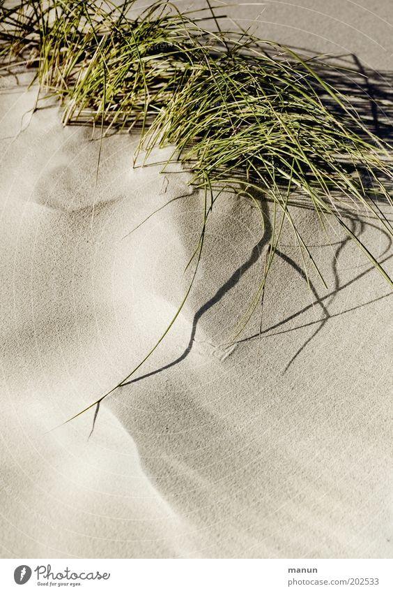 Sand ruhig Natur Pflanze Gras Sträucher Wildpflanze Dünengras Strand Wärme weich Idylle Umweltschutz Farbfoto Strukturen & Formen Textfreiraum unten