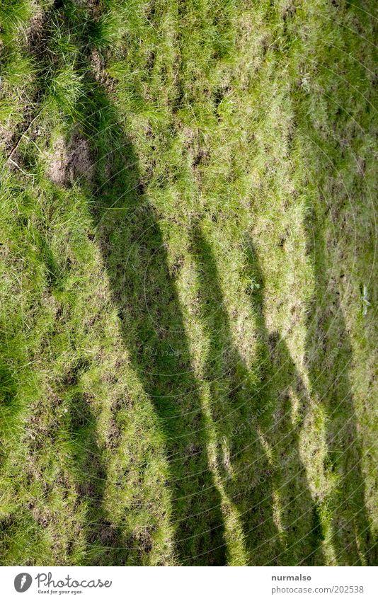 Schattendasein Mensch grün schön Gras Menschengruppe warten maskulin stehen Zusammenhalt Größenunterschied