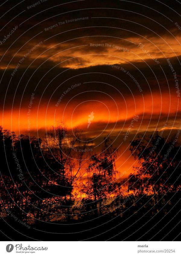 Abendhimmel farbenreich Himmel Natur Farbe Baum rot Landschaft Wolken dunkel schwarz Stimmung Horizont orange träumen Kraft fantastisch bedrohlich