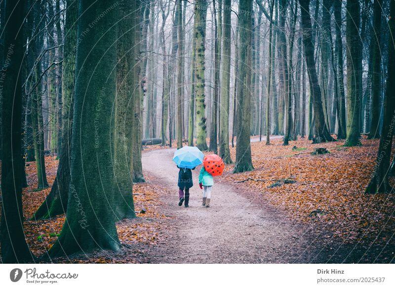 Walking in the rain Mensch blau Baum rot Wald Herbst Zusammensein gehen Regen Freizeit & Hobby Wetter bedrohlich Fußweg Spaziergang Regenschirm Spazierweg