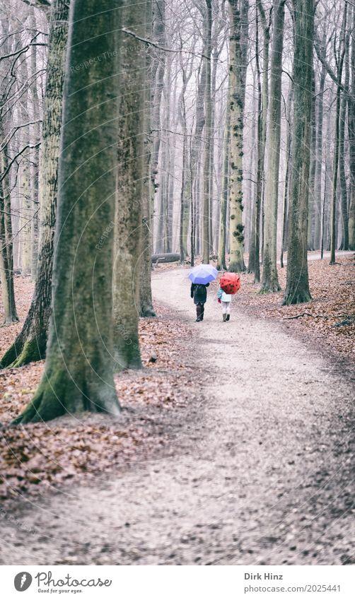 Walking in the rain II Paar 2 Mensch blau rot Freundschaft Partnerschaft Erholung Freizeit & Hobby Pause Schutz Umwelt Zusammenhalt trist Baum Wald Herbst