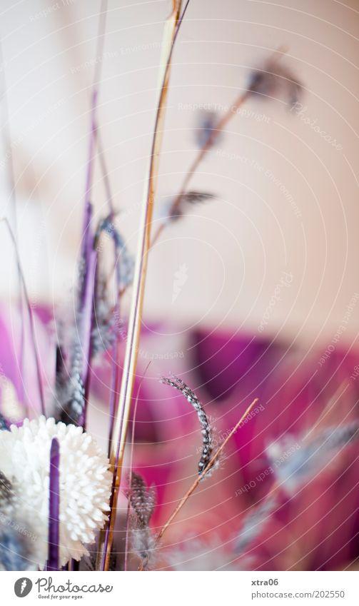 deko Kitsch Dekoration & Verzierung Feder Blumenstrauß Farbfoto mehrfarbig Innenaufnahme Kunsthandwerk Gesteck