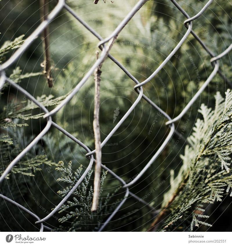 Spaziergangsdetail Natur Pflanze Umwelt Sträucher authentisch natürlich Zaun Farn Grünpflanze Maschendrahtzaun Grundstücksgrenze
