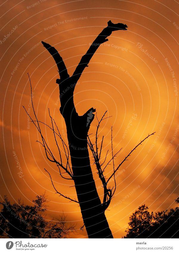 Toter Baum vor lebendigem Himmel Natur Wolken Umwelt Senior Tod Stimmung orange Ast bedrohlich Vergänglichkeit Trauer Baumstamm Gewitter Klimawandel