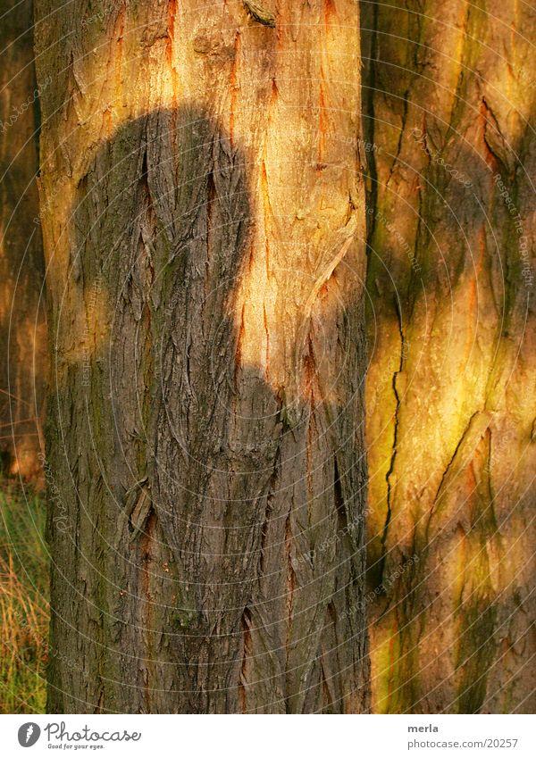 Ich und mein Schatten Mensch Frau Kind Mann Jugendliche Baum Sonne Einsamkeit Erholung Junge Frau Erwachsene Junger Mann Senior Leben feminin 18-30 Jahre