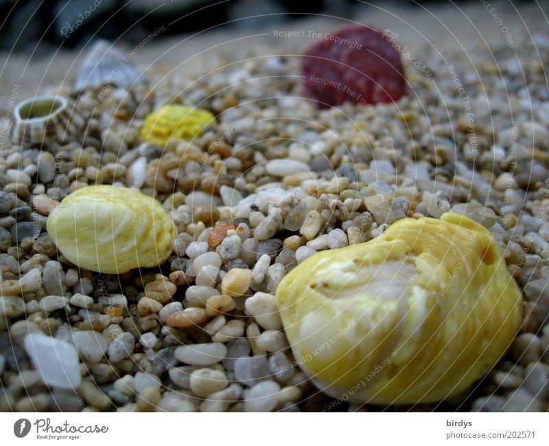 Playa Maya schön Strand gelb Farbe Küste Muschel exotisch Kies Stein Strandgut Muschelschale Steinstrand