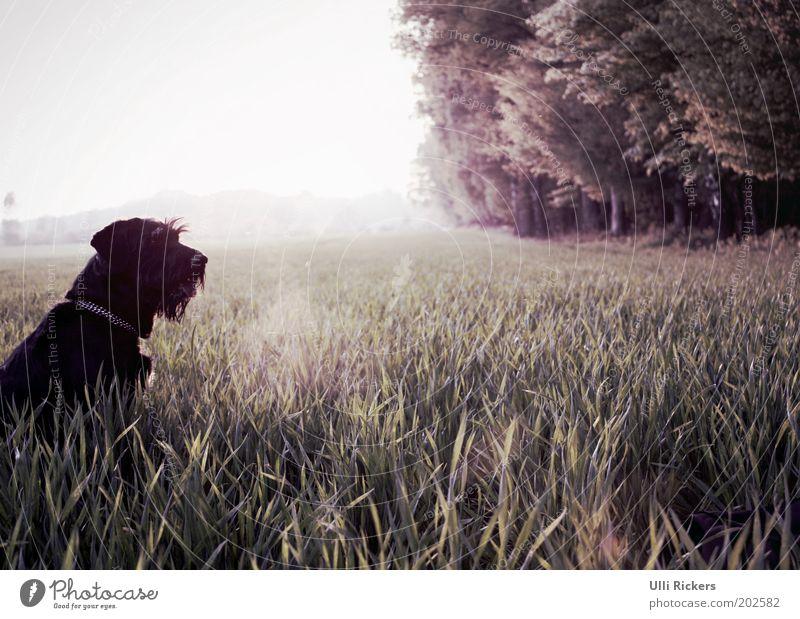 . Natur Sommer Ferien & Urlaub & Reisen Tier Wald Gras Freiheit Hund Landschaft Feld Umwelt Ausflug Sträucher Freizeit & Hobby beobachten Schönes Wetter