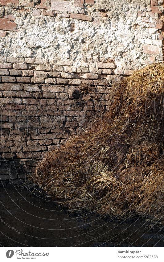Golddepot Wand Mauer dreckig natürlich Kot Backstein Stroh Landwirtschaft Stein Misthaufen Düngung stinkend