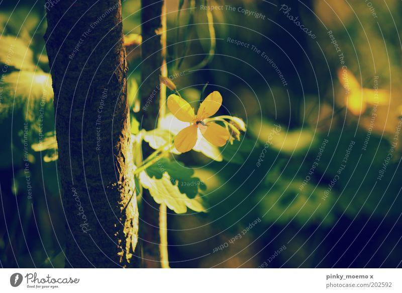 bling bling Natur Wald Stimmung gelb Baumstamm Blume Blüte Sumpf-Dotterblumen Unschärfe altehrwürdig Farbfoto Gedeckte Farben Außenaufnahme Detailaufnahme