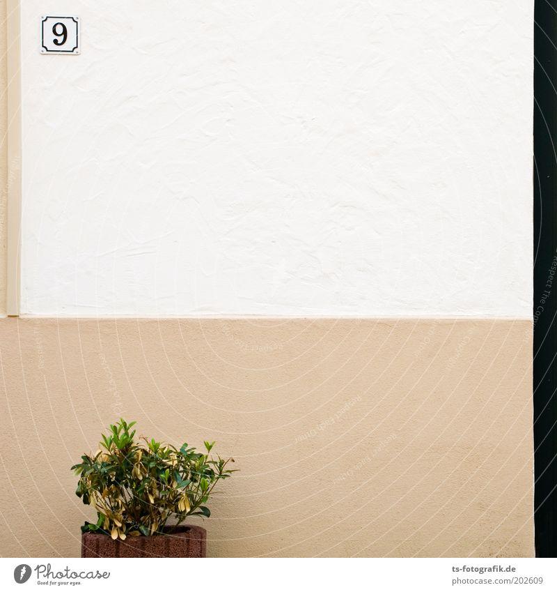 Alle Neune Pflanze Haus Wand Stein Mauer Gebäude Linie braun Beton Schilder & Markierungen Fassade Ordnung Sauberkeit Ziffern & Zahlen Langeweile Stillleben