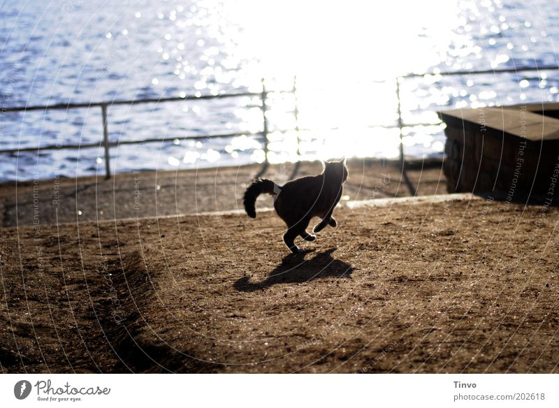 7 Leben Wasser Tier springen Spielen Katze Sand gehen Erde geheimnisvoll niedlich Jagd Seeufer Schönes Wetter Geländer Respekt Haustier