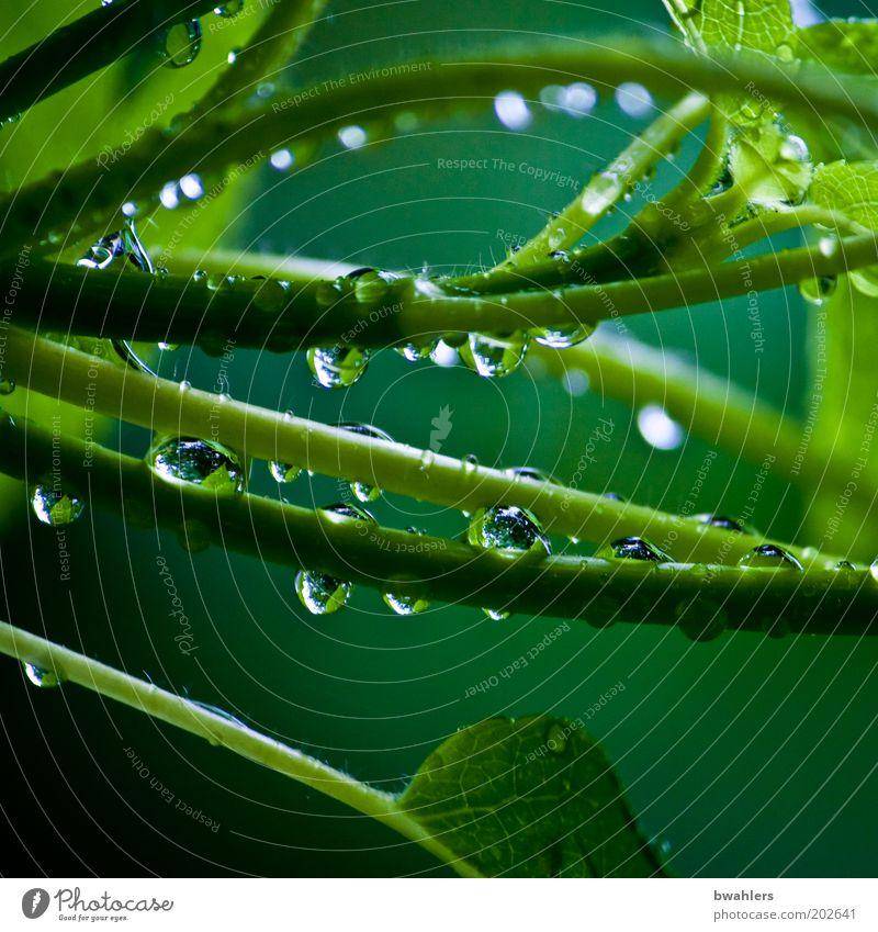 Lebens-Grün Natur Wasser grün Pflanze Frühling Regen Wetter Wassertropfen nass Sträucher Grünpflanze