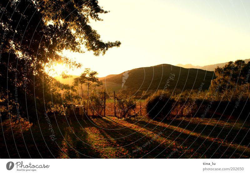 sunrise sunrise Baum Sonne Ferien & Urlaub & Reisen ruhig Berge u. Gebirge Landschaft Stimmung elegant ästhetisch Tourismus Afrika Warmherzigkeit Idylle