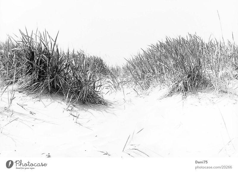 Düne Meer Strand Sand Stranddüne