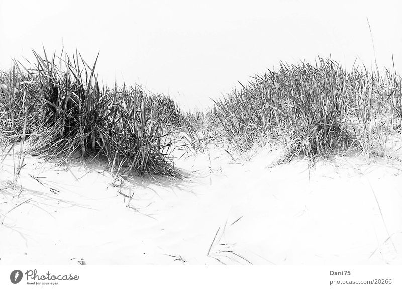 Düne Strand Meer Stranddüne Sand