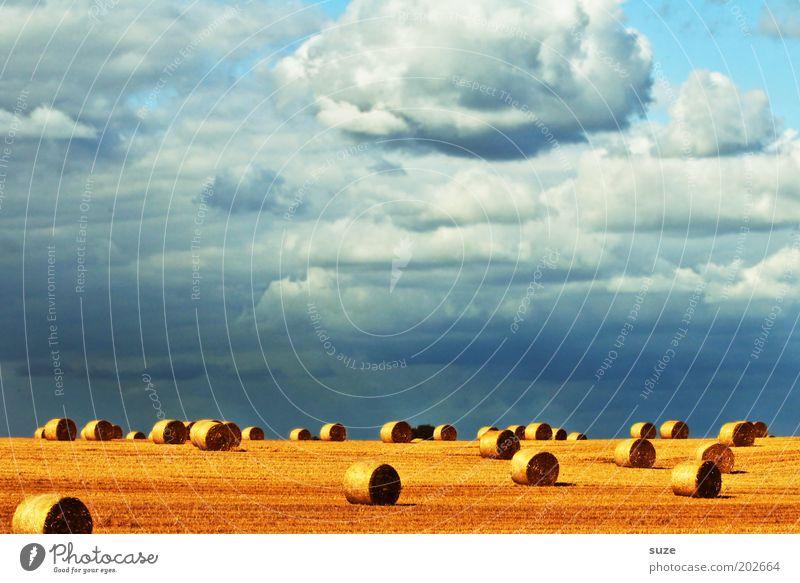 Erntedank Sommer Umwelt Natur Landschaft Urelemente Himmel Wolken Klima Schönes Wetter Wärme Feld blau gelb gold Rolle Strohballen Kornfeld Landleben