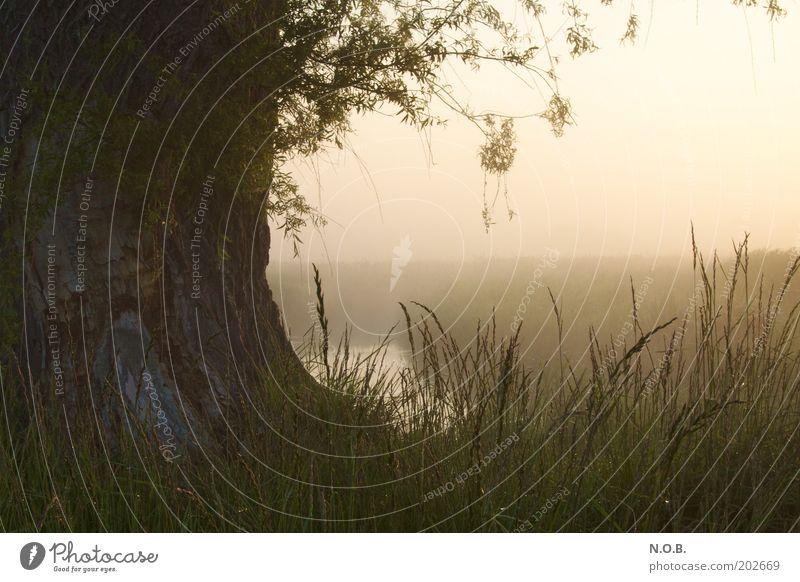 Tor zur Phantasie Umwelt Natur Landschaft Sonnenaufgang Sonnenuntergang Sonnenlicht Frühling Schönes Wetter Nebel Baum Gras Wiese Bach träumen ästhetisch