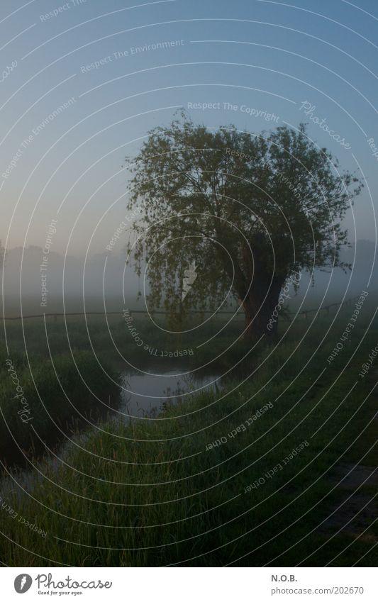 Traumbaum Natur schön Baum Wiese Gefühle Frühling Landschaft Stimmung Nebel Umwelt frisch ästhetisch Romantik fantastisch natürlich Bach