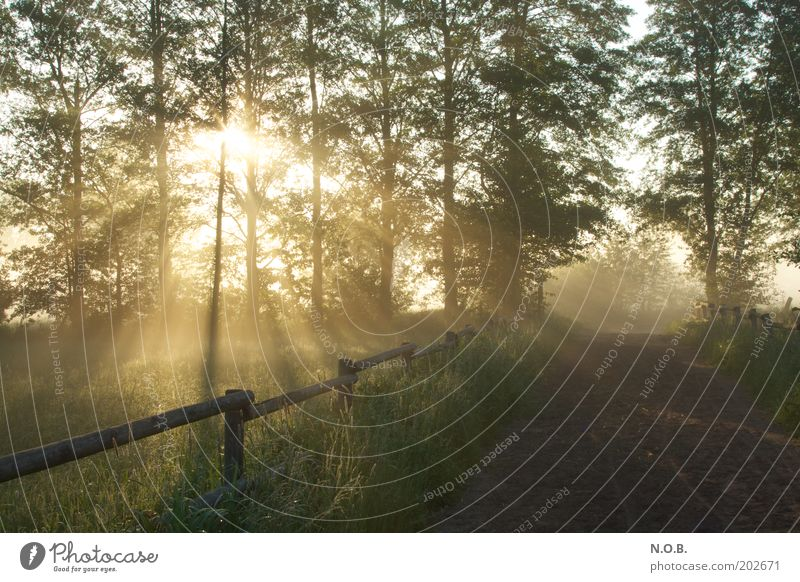 Eingang oder Ausgang? Natur schön Baum Sonne grün ruhig Wiese Frühling Wege & Pfade Landschaft Umwelt Hoffnung ästhetisch Schönes Wetter Vorfreude