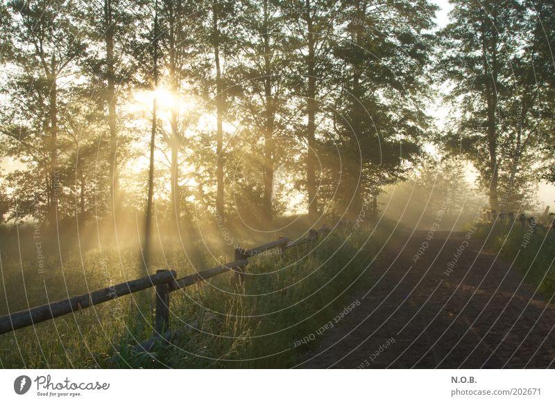 Eingang oder Ausgang? Umwelt Natur Landschaft Sonne Sonnenaufgang Sonnenuntergang Frühling Schönes Wetter Wiese ästhetisch grün Frühlingsgefühle Vorfreude schön